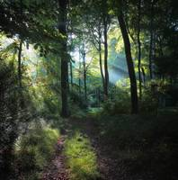Summer Woodland Light