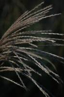 Autumn Grass 3
