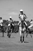 POLO 2014 Season - International Polo Club