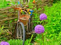 The Bike In The Garden
