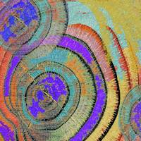 Tree Ring Abstract 3