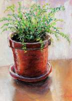 Fern in a Red Pot