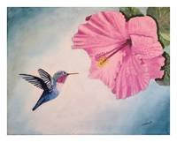 Hummingbird Hovering Near Pink Hibiscus