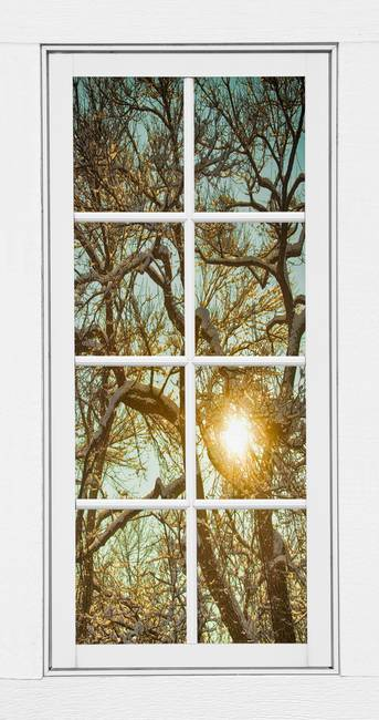 Golden Forest Branches White 8 Windowpane View