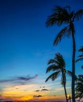 Palms Against Sunset - Islamorada, Florida