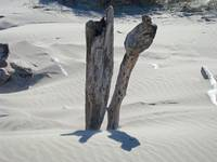 Driftwood art prints Sandy Shoreline Landscap