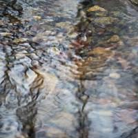 winter stream by julie scholz