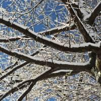 winter wonder by julie scholz