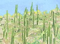 Many Saguaros Reimagined