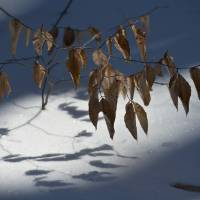 winter leaves by julie scholz