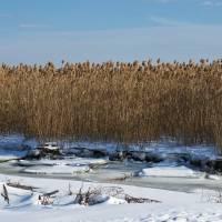 piermont marsh by julie scholz