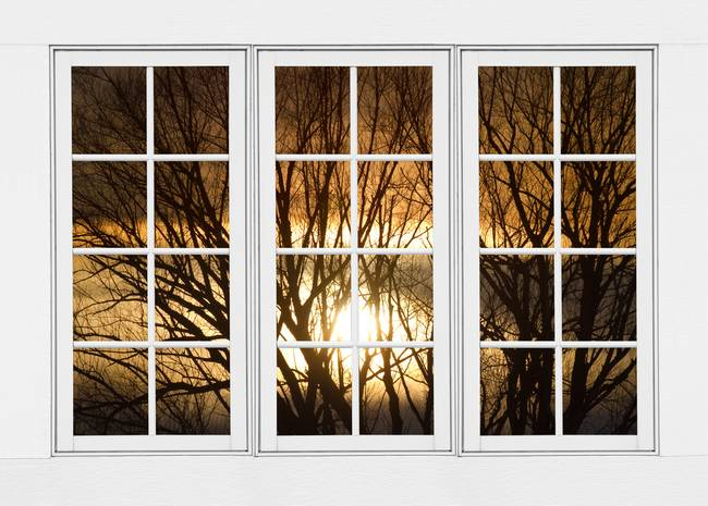 Golden Sun Silhouetted Tree Branches White Window