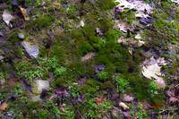 Forest Floor Moss and Leaves Photography