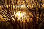 """Golden Tree Dream by James """"BO"""" Insogna"""