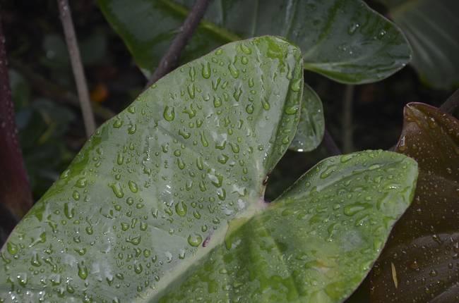 Rain on Leaf 4375