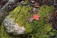 Mossy Rock Maine Woods 0010 by Tony Kerst