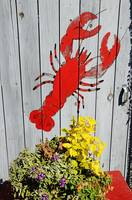 Lobster Shack Door Maine 9621 by Tony Kerst