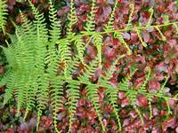 Ferns Art Prints Forest Green Fern Branches