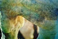 Abstract Horse Photograph