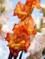 Shelleys Flowers-Cropped by Joe Gemignani