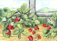 Strawberries and Rail Fence