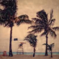 Lifeguard Stand-Hwd BigPalmsLittlePalms by Joe Gemignani