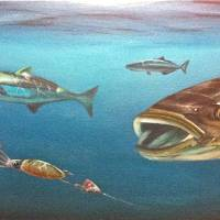 """""""cobia"""" by Davidwomackfinearts"""