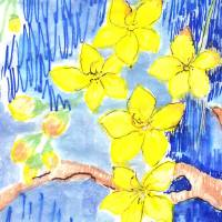 golden cassia blooms Art Prints & Posters by Lorna Fraser