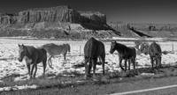 Friends on the Road to Canyonlands