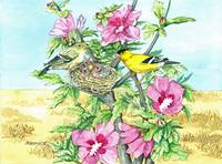 Goldfinch & Rose of Sharon