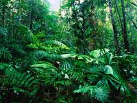 Tropical Rainforest, Lacey Creek, Queensland, Aust