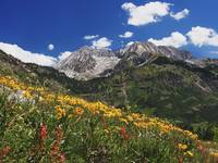 Spring Wildflowers in Alpine Meadow at Lead King B