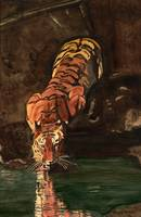 Siberian_Tiger_ Reflection