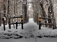 Cross Country Ski Trail in the Finger Lakes Nation