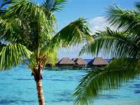 Tropical Accommodations, Moorea Island, French Pol
