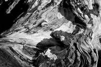 Driftwood in black and white