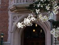 Cherry Blossoms over Campus Doorway, Spring 2013