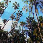 """Palm Canyon San Diego by RD Riccoboni"" by RDRiccoboni"