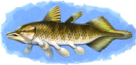 Chinlea, an extinct lobe-finned fish from the Tria