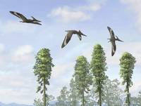 Pteranodon longiceps trio, two males and a female