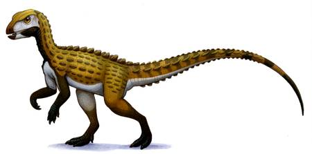 Scutellosaurus, an early Jurassic herbivore