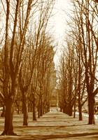 Boulevard of trees