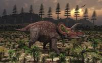 Artist's concept of Triceratops