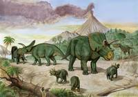 An Albertosaurus observes a family of Arrhinocerat