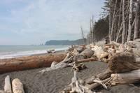 Waves at La Push Beach by Carol Groenen