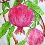 Pomegranates on a Tree Prints & Posters