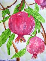 Pomegranates on a Tree