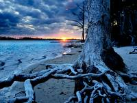 Weathered Tree Roots Blue Sunset-Inspirational Art