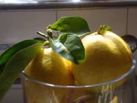 Lemons With A Ray Of Sunlight