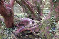 The Heartwood Tree